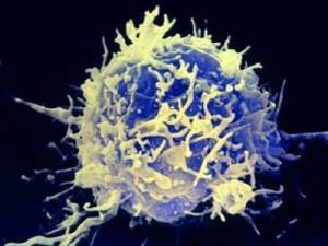Kankerbestrijding