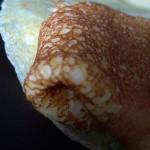 Dagelijkse Kost pannenkoeken